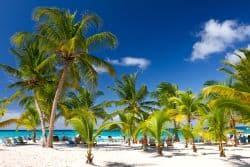 Toller Strand mit vielen Palmen