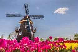 Tulpenfeld in Holland