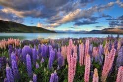 Naturlandschaft in Neuseeland