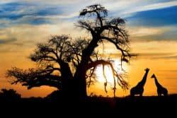 Wunderschöner Sonnenuntergang in Südafrika