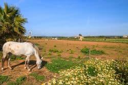 Schönes Pferd auf der Weise
