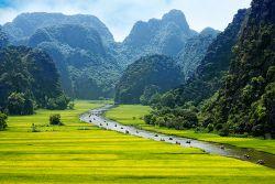 Reisfeld und idyllischer Fluss