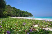 Schöne Flora und Fauna auf Phuket