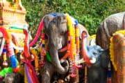 Geschmückte Elefanten