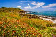 Schöne Küste mit Blumenfeld