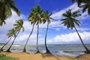 Schöner Strand mit Palmen