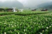 Wunderschönes Blumenfeld im Nationalpark