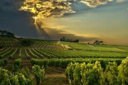 Weinanbau in Südfrankreich