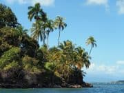 Palmenküste