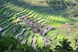 Riesige Reisfelder