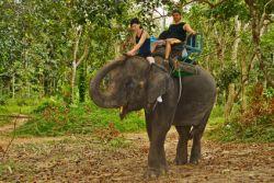 Touristen reiten auf einem Elefanten