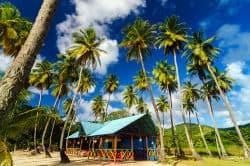 Kleines Häuschen unter Palmen