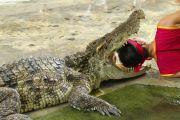 Showeinlage mit einem Krokodil