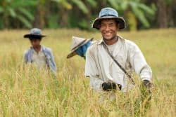 Farmer bei der Arbeit