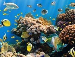 Schönes Korallenriff im Ägypten Urlaub