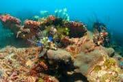 Unterwasserwelt vor Balis Küste