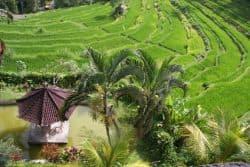 Schöne Landschaft auf Bali