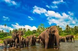 Elefantenherde in der Natur