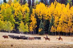Wilde Natur im USA-Urlaub in Colorado