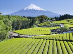 Fantastische Landschaft in Japan