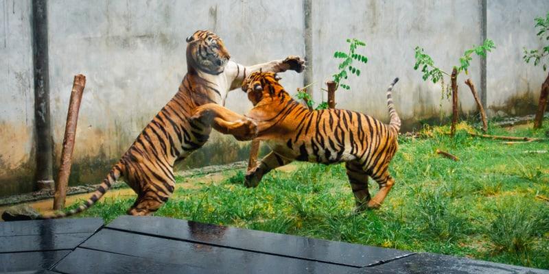 Aquarium und Tiger Zoo