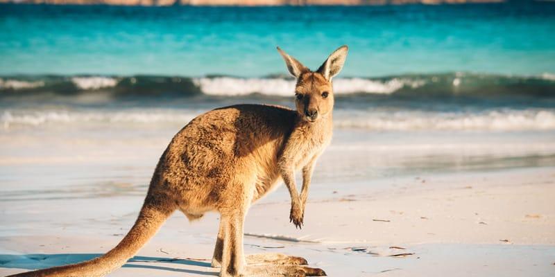 Australien im Winter
