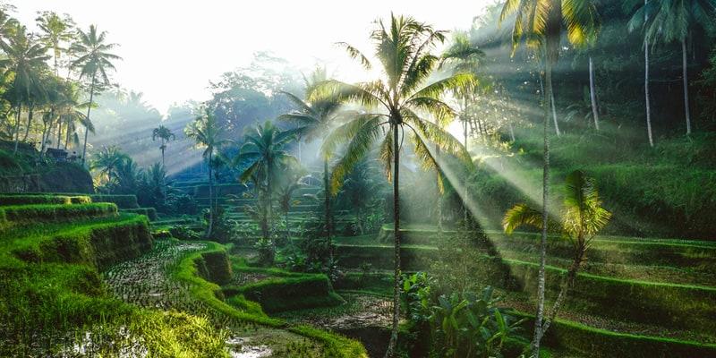 Bali im Februar
