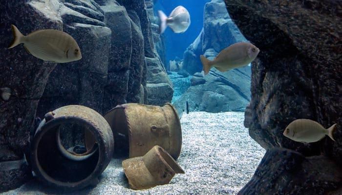 Fische im Cretaquarium