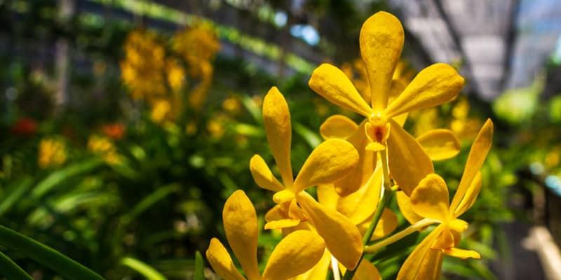 Thai Village und Orchid Garden