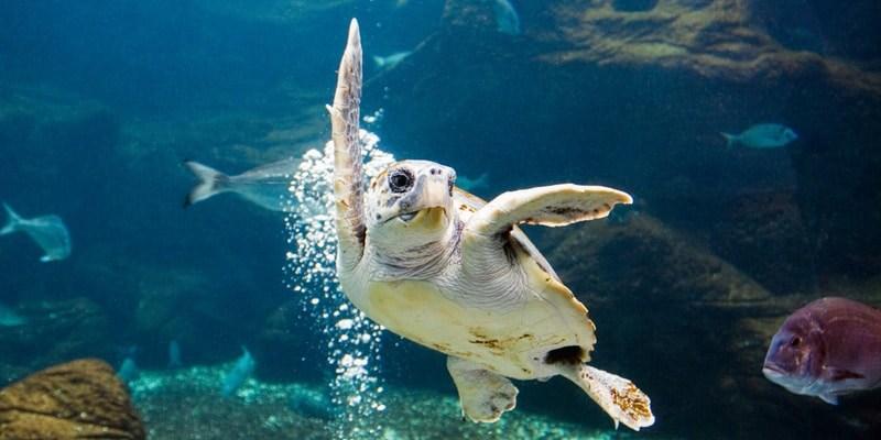 Schildkröte im Aquarium