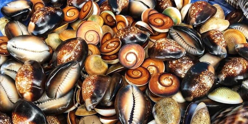 Phuket Sea Shell Museum